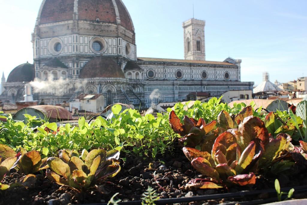 Giardini pensili - Coperture continue a verde