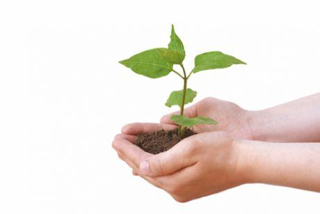 T&G: ..Interagire con le piante per rendere esclusivi i vostri spazi verdi..